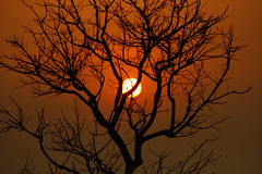 The Sunset caught me..... (Mumu24) Tags: sunset nature assam mothernature kaziranga kaziranganationalpark platinumheartaward