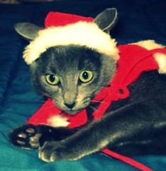 christmascat (blood.beth) Tags: bear santa christmas ryan beth kingsley