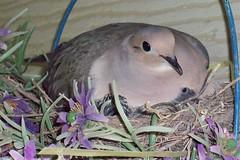 baby bird peeking