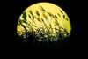 Susuki Sun (TheJbot) Tags: sun vignette susuki jbot lightroom elitephotography thejbot