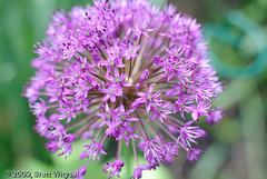 Round_flower