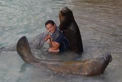 Manuel training sea lion dolphin and manatee (ABC Dolphin Trainer Academy) Tags: sea dolphin lion manatee cancun trainer trainingsession dolphindiscovery animaltraining dolphintrainer positivereinforcementtraining entrenamientorefuerzopositiva entrenadordedelfines