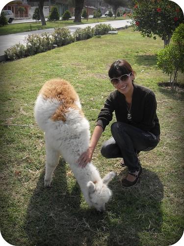Alpaca and I