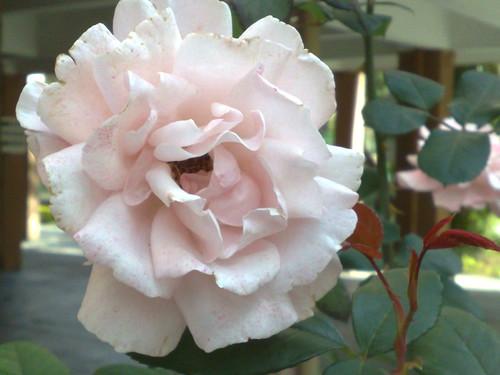 Flores de inverno por você.