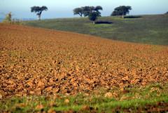 Ceara a despontar (Torre do Frade) Tags: birthday trees sky green portugal nature garden landscape photo spring wheat cereals alentejo cereais