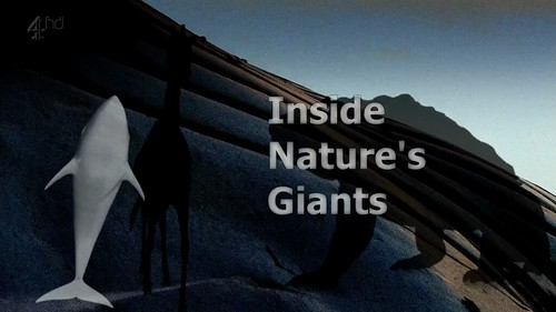 Inside Natures Giants   The Elephant   S01E01 (29th June 2009) [HDTV 720p (x264)] preview 0