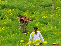 Nature work (kezwan) Tags: green nature work spring kurdistan 1on1 kurd kezwan zozan heliz