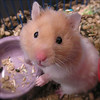 el hamster de mis sueños :P