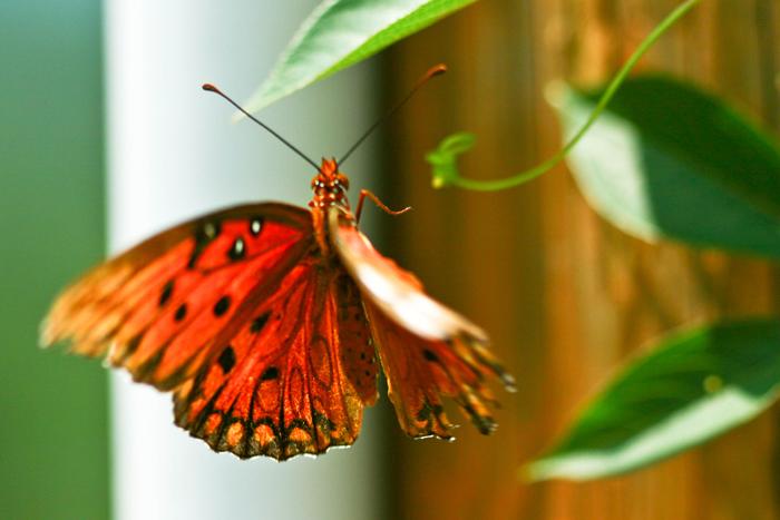 Mid-flutter
