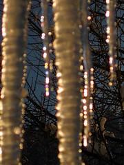 Jewels (AincaArt) Tags: tree ice eis icicles baum eiszapfen rubyphotographer canonixus80is aincaart