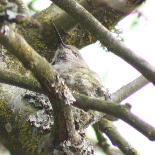 hummingbird_2009-03-09