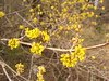 fioriture sul Carso