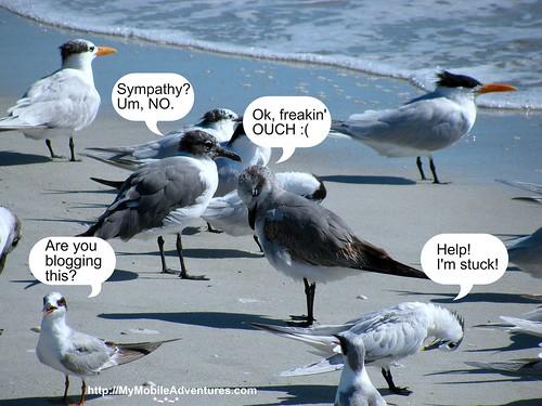 IMG_0375-mixed-seagulls-Sanibel