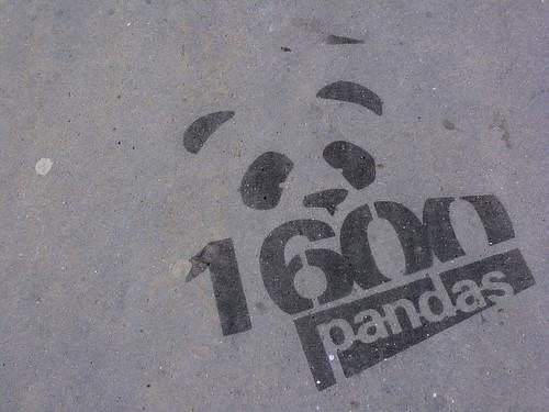 1600 pandas (?)
