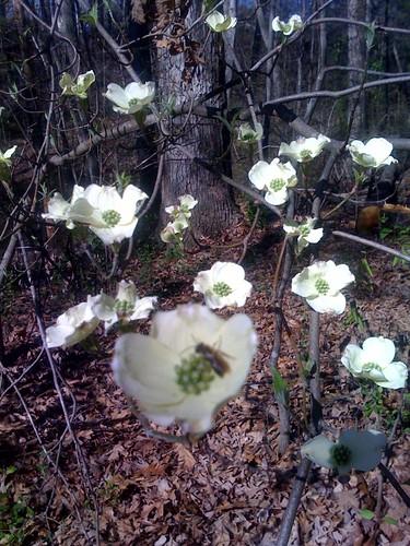 Spring at Duke