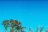 Wake turbulence (slimmer_jimmer) Tags: airplane xpro crossprocessed pentaxk1000 easyjet waketurbulence pentaxsmc50mmf14 ringshall ringshallcoppice