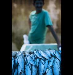 burn it blue - Amazonas (© Tatiana Cardeal) Tags: travel blue brazil fish brasil digital amazon market feira peixe development 2009 amazonas brésil amazonia amazonie desenvolvimento sãogabrieldacachoeira environmentalimpact 亚马逊 아마존 亞馬遜 амазония αμαζονία アマゾニア أمازونيا