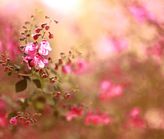 Painting with light (Aileenie) Tags: pink flowers plant macro tree green nature painting bokeh vosplusbellesphotos