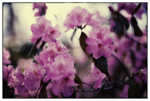 Gunnebo - blommor-19