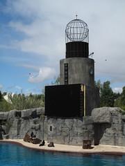 Lake theater / Teatro-Lago (SamwiseGamgee69) Tags: madrid españa animal animals spain seal seals animales sealion focas faunia foca leónmarino