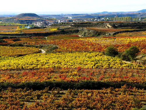 The Rioja wine