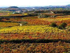 Color Rioja (Shaury) Tags: field landscape paisaje vineyards land campo cultivos crops uva rioja grape brias araba lava vias viedos riojaalavesa qcfaj
