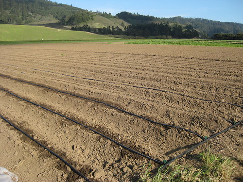Fat Cabbage Farm field ready for planting.