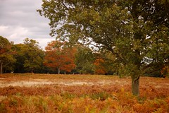 Richmond Park Autumn
