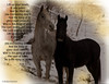 Horses at the Hoeft Farm [3432] (K. B. Photography) Tags: christmas winter horses horse white snow black cold nature rural fur landscape grey december country watching peaceful creation together pasture mammals scripture equine corral bibleverse