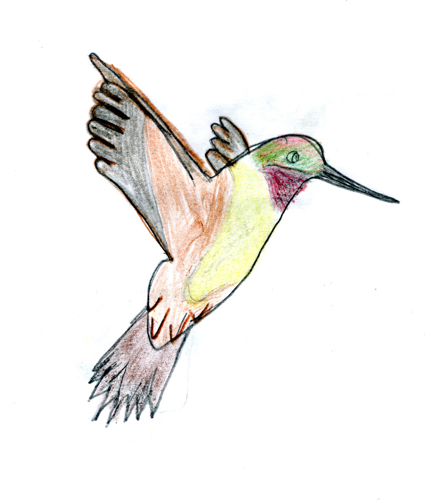 Rufous Hummingbird -- by Zippy age 9