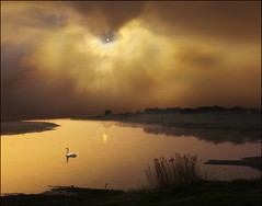 Floating! (adrians_art) Tags: sky cloud reflection water grass weather birds silhouette reeds swans rivers infinestyle