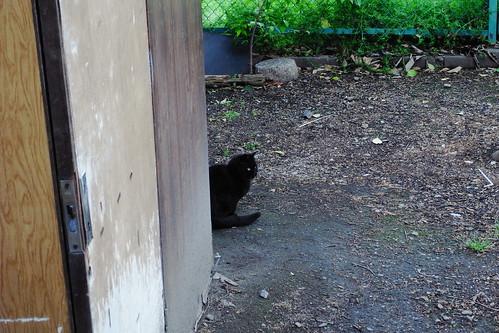 Today's Cat@20090508