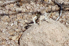 Saguaro National Park (Jenifer Steller) Tags: tombstone saguaronationalpark sonorandesert arizonatuscan