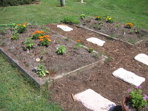 The original two garden boxes: herbs, peppers and tomatoes, tomatoes, tomatoes