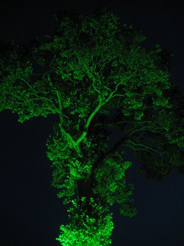 Lit-up tree at Hay Book Festival 1