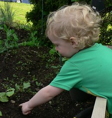 Our little farmer hunts for bugs in the vegetable garden