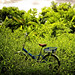 one bicycle in a grassy field