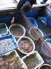 Fresh seafood Halong Bay