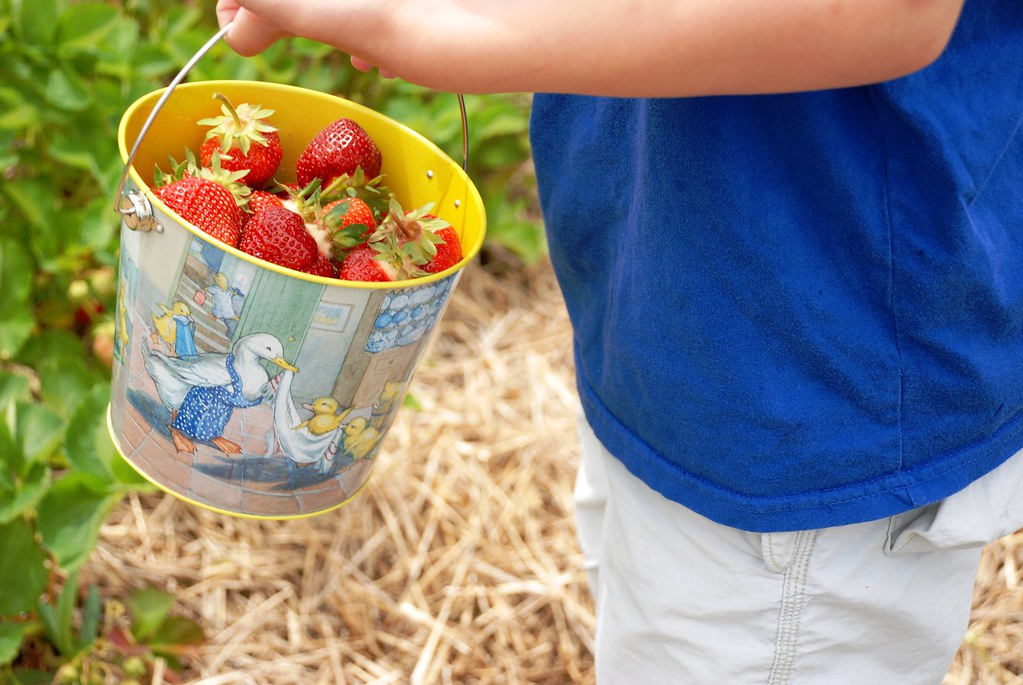 oodles of berries