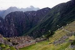 Machu Picchu 068