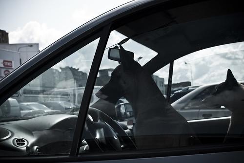 Keturkojai vairuotojai