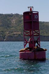 basking on the buoy