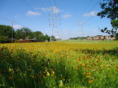 wildflowers, plano, texas.