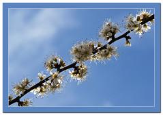 flower120 (Kelvin_) Tags: 15challengeswinner