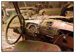 15 (jluk) Tags: rust belgium oldcars mousse rouille oxydation urbex cimetary chatillon vieillevoiture epave abandonnedcars