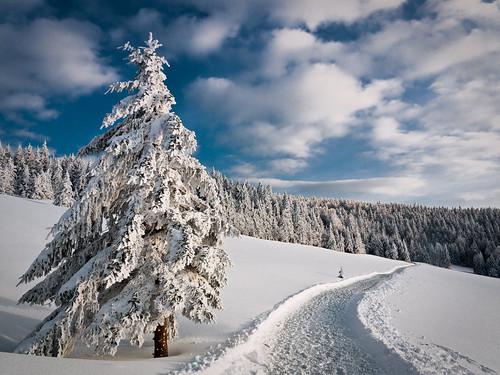 winter inspiration 10 fotos die mir gefallen haben kwerfeldein