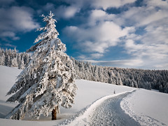 Enter the Winter Wonderland (andywon) Tags: winter sky snow nature clouds germany way landscape deutschland path fir spruce schwarzwald blackforest winterwonderland schauinsland badenwrttemberg explored