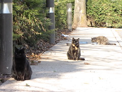 Santana, Chelsea and Maggie (Hazboy) Tags: pet cats cat newjersey kat feline chat chelsea kitty maggie gato gata neko santana katze macska cica gatto  pussycat poes koka kedi katt straycat pusa gati kocka  katinas  hazboy hazbo