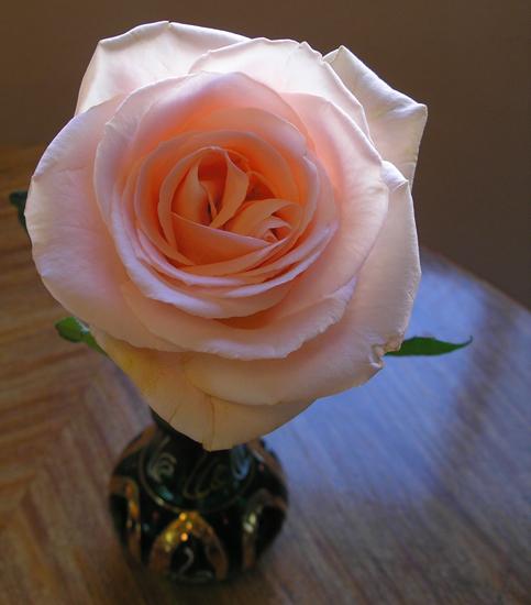 Study 4: Peach Rose