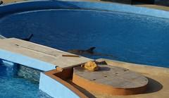 Son torturados y viven enfermos de neumonía, gastritis y úlceras           Mediterraneo Marine Park --- Malta (CaptiveDolphins-vs-WildDolphins) Tags: malta dolphins shame delphinarium malte mediteraneo maltagozo marinelands mediterraneomarinepark captivedolphins themediteranneomarineparkinmaltaisashame unehonte unaverguenza dauphinscaptifs themediteranneomarineparkinsliemathemediteranneomarineparkinmalta themediteranneomarinepark dauphinsdelfines delfinescautivos